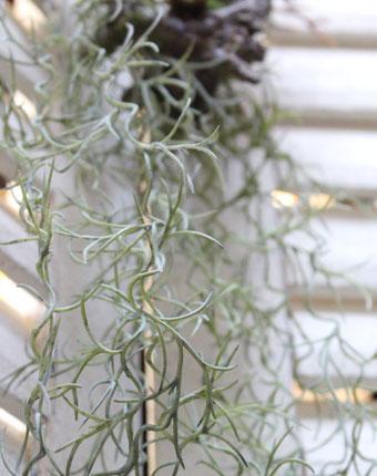 ウスネオイデスの造花グリーン