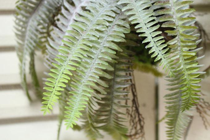 植物のあるナチュラルディスプレイ