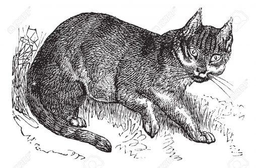 古い猫のイラスト