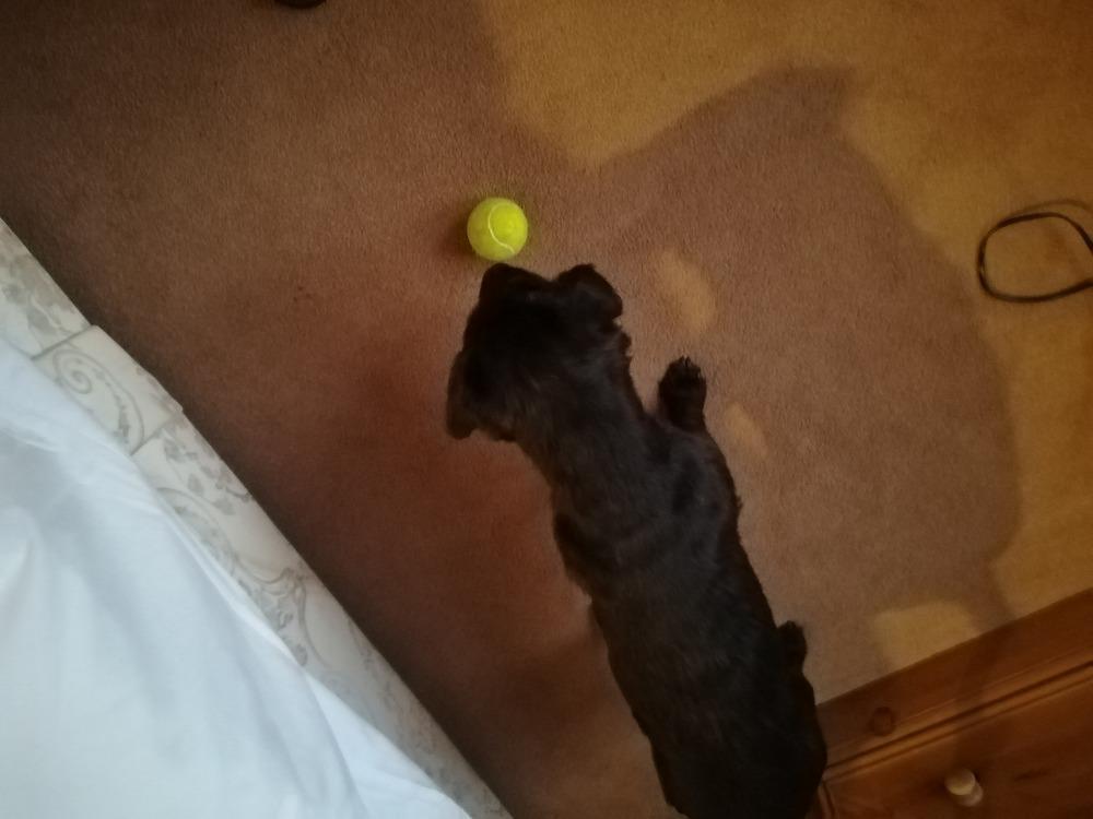 クライブの犬